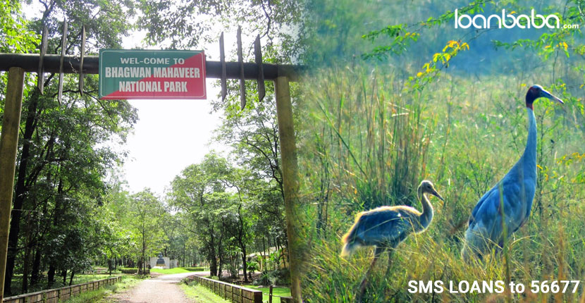 Discover-the-Wildlife-Sanctuaries