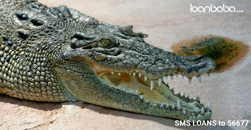 Watching-the-Crocodiles-at-Cumbharjua